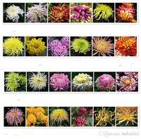 Wholesale Chrysanthemum Flower Seeds Garden seeds DIY Garden planting seeds beautiful flower seeds outdoor plants kinds