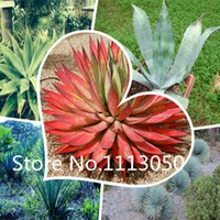 agave plant - 100pcs Perennial Agave Seeds World Hottest Plant Seeds Garden Bonsai Seeds mix colors