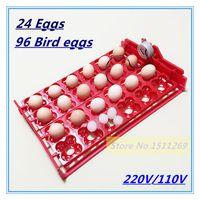 Wholesale Incubator eggs Bird Incubator egg rack Tray automatic egg incubator eggs Quail Parrot incubation tool