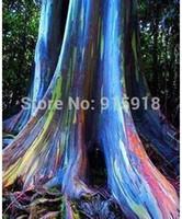 Wholesale Tree seeds Rainbow Eucalyptus Seeds Bark color is like a painting