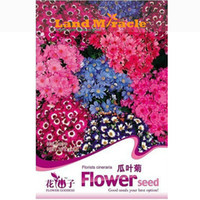 annuals shade - 1 Original Pack Seeds Pack Cineraria Hybrida Royalty Mixed Flower Annual Shade Loving or Indoor A079