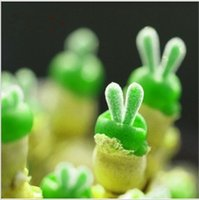 Cheap 100pcs Lithops Pseudotruncatella green Bunny seeds Stone Flower Seeds Bonsai plants Seeds for home & garden