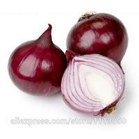allium cepa - Vegetable seeds Allium cepa onion seeds red onion about particles