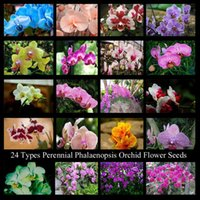 Wholesale 24 Types Perennial Phalaenopsis Orchid Flower Seeds Professional Pack Seeds Pack Rare Butterfly Orchid Seeds NF564