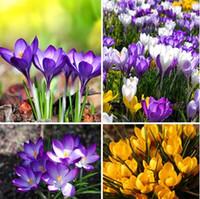 Wholesale Saffron flower crocus seeds it is not the Saffron bulbs seeds bag