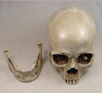 art class - 1 life size human skull model resin skull art class teaching Model
