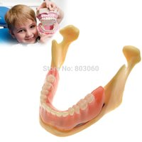 Wholesale Dental Implant Teeth Model Of The Lower Jaw For Dentist Communication Teaching ZYR