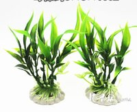 Wholesale Hot pieces per pack flowers aquatic plants in pots aquatic plant