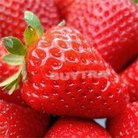 Wholesale Stylish Beautifying Red Climbing Strawberry Seeds Fresh Fruit Seeds Bonsai