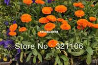 Семена цветущие Цены-Семенной Хранители Exchange, 1066 семена цветов календулы смесь (все виды), 200 семян Packet ~~~ Бесплатная доставка