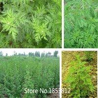 artemisia flower - Sale New Home Green Garden Plant Seeds Artemisia Annua Seeds One year Mugwort