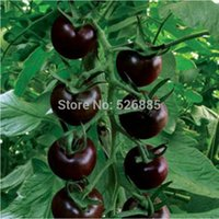 Wholesale Black Pearl tomato seeds fruit tomato seeds non GMO Seed particles