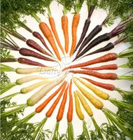 beautiful yard landscapes - Non Hybrid Rainbow carrot Seeds Vegetable Edible Landscaping Eat Your Beautiful Yard