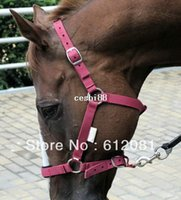 Wholesale Wine red Black Blue Horse Riding Halter With Metal Accessories Fiber Woven