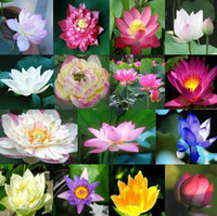 Wholesale colorful waterlily seeds lotus flower seed Gorgeous Aquatic plants seeds lotus seeds color T01