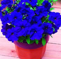 balcony sets - 100pc Morning glory seeds petulantly seeds balcony bonsai flower petunia set