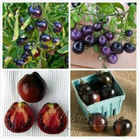 Wholesale Heirloom Indigo Rose Tomato Seeds Vegetable Cheap Easy Backyard Garden