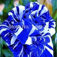Wholesale Flower Bonsai seeds Blue Dragon Rose Seeds Rare Color DIY Yard or Potted flower Home Garden