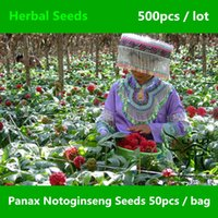 Cheap Family Araliaceae Panax Notoginseng Seeds 500pcs, Widely Cultivated Tienchi Ginseng Herbal Seeds, Chinese Medicinal Sanchi Seeds