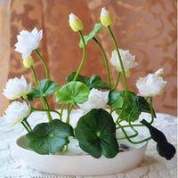 Мешок шара RU-Чаша лотос - для дома и сада бесплатную доставку - (семена) внутренний дворик, садово-огородный, овощи, цветы, фрукты - семена / мешок дома сад