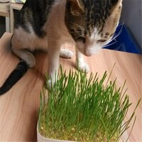 bear grass seeds - 3 sets Cats grass suit include crystal soil nutrient solution and quality seeds aid cats digestion pets accessories