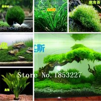 aquarium grasses - Hot selling aquarium grass seeds mix water aquatic plant grass seeds kinds family easy plant seeds