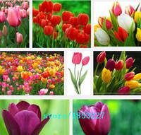 bonsai plants - Hot Selling Tulip Bulbs Tulip Ball Seeds Bonsai Flower Pot Plant Ball Mix Colors DIY Home Garden
