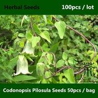 Cheap pilosula seeds Best ginseng seeds