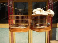 beijing water - Quality bamboo bird cage handmade beijing birds with man playing bamboo bird cage round cage water bird cage