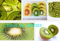 actinidia chinensis - 100 Hardy Kiwi SEEDS Fruit Seeds Actinidia chinensis Perennial delicious