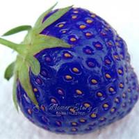 Cheap DIY Home Garden Best seeds fruit