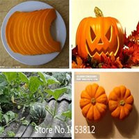 atlantic sales - Sale seeds pack Atlantic Giant Pumpkin Seeds NON GMO Organic Vegetable Seeds