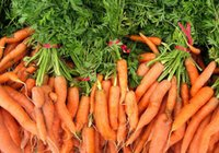 beauty cancer - 50 seeds bag Non transgenic carrot red carrot seeds vegetable seeds may lower blood pressure to stay kind of anti cancer beauty
