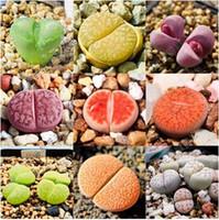 achat en gros de pierres d-Imported pierre brute graines de fleurs, plantes grasses ,, il a aspiré l'effet du formaldéhyde et de purifier l'air - 100 graines