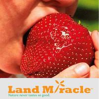 al por mayor súper orgánica-200 Semillas / paquete, Super Giant Fresas de Fruta de Fresa Roja de Manzana, semillas de fresa orgánica no-GMO de Heirloom para Fruta de jardín # M27