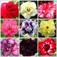 Wholesale 100 real rainbow desert rose seeds Flower pots planters Adenium obesum seeds Mixed shipment seed bag