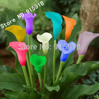 Cheap Flower seeds 100 PC bonsai colorful calla lily seed, rare plants flowers Home gardening DIY