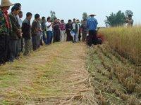 Wholesale Mini wheat and rice reaper automatic wheat harvester machine wheat rice reaper machine