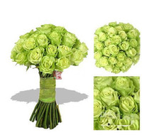 authorized green - 30 OFF Green Rose seeds rose seed per from DHgate Authorized supplier