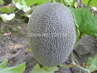 Wholesale 10g Thickness skin sweet white melon seeds Fruit Green Beauty Hami melon seeds Qingtian06