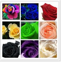 Wholesale 450Pcs Per Color Rare Rose Flower Seed Multicolor Plants Home Garden Rainbow Black Blue Pink White Red Green AE01537