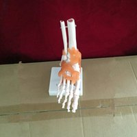 anatomical foot model - Life Size Right Foot Joint Anatomical Model Skeleton with ligaments Human Medical Anatomy