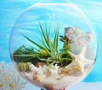 Wholesale wall hanging glass plant kits terrarium with plant and moss wall fish tank wall decor home decor green gifts for wife