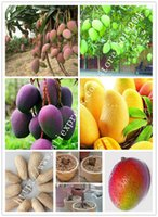 Capricorn best quality seeds - High quality gold fruit seeds the best eating tropical mango seed PC Large Plants