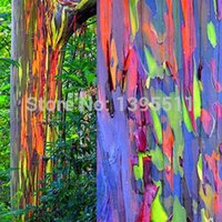 Wholesale 30 BAG rare Rainbow Eucalyptus deglupta showy tropical tree bonsai houseplant greenhouse