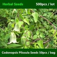 Cheap Perennial Herbaceous Vine Codonopsis Pilosula Seeds 500pcs, Herbs Poor Man's Ginseng Seeds, Health Care Function Dang Shen Seeds