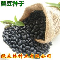 bean sprout seeds - black bean vegetable seeds sprout seeds in bulk for all the family soilless cultivation