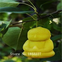 Cheap 2015 Bonsai ginseng Seeds 100pcs 10kinds mix Flower Seeds Novel Plant for Garden Free Shipping