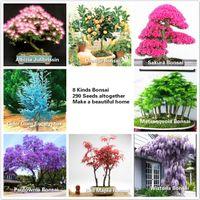 al por mayor árbol bonsai-8 tipos Bonsai Tree Seeds, 290 semillas, Albizia, naranja, Sakura, Metasequoia, Paulownia, Wisteria, arce japonés Envío gratis Taocan-2