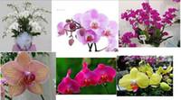 Семена цветущие Цены-30% OFF100pcs * Микс-цветные бабочки цветок орхидеи фаленопсис Семена Бонсай Семена растений цветок *